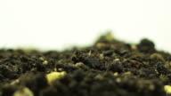 Germinating Plant video