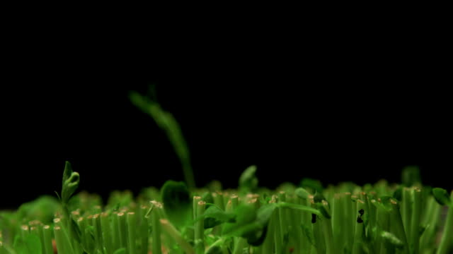 Germinating Plants Time Lapse video