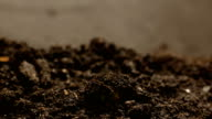 Germinating Seed Growing in Ground Agriculture Spring Summer Timelapse video