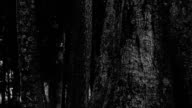 Ghost in dark forrest video