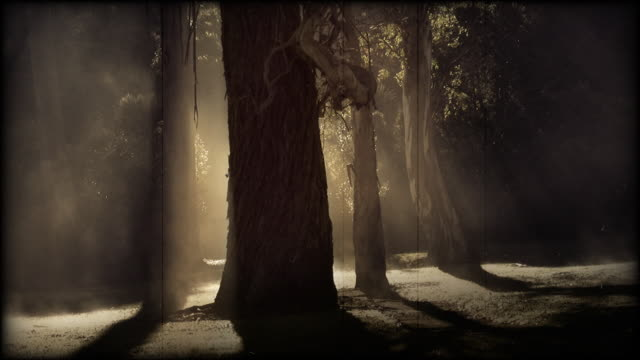 Ghostly forest in the mist. Sepia-toned old film effect video