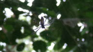 Giant Spider video