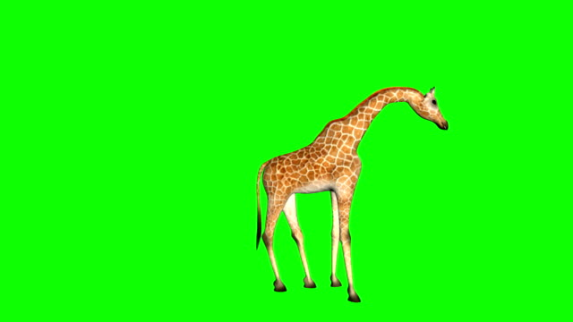 Giraffe_Kick_Green_Mat video