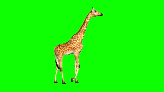 Giraffe_Walk_Cycle_Loop_Green_Mat video
