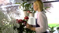 Girl at work in flowers shop and smelling red roses video