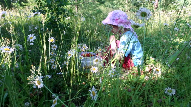Girl child eats wild strawberry on the meadow. video