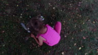 Girl child in glasses plays with a gray kitten in the yard. A little girl likes to play with the kitten. video