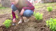 Girl digging in family's garden video
