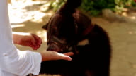 Girl feeding a bear from hand in Zoo video