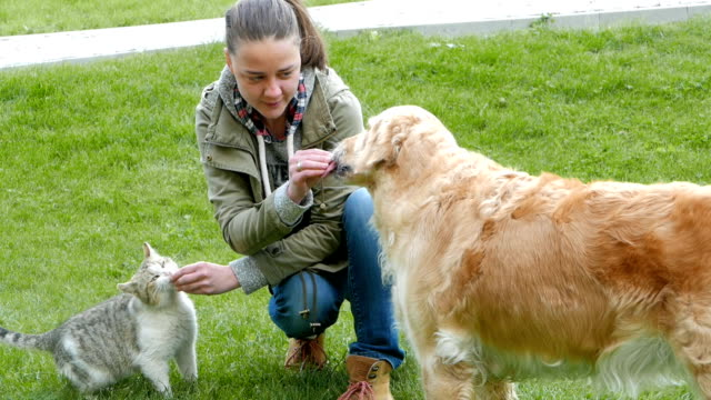Girl feeding cat and dog friends at the same time video