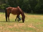 Girl grooming horse NTSC video