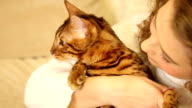 Girl hugging and playing with Bengal cat. Close-up. video