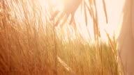 Girl in dunes video