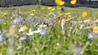 Girl in the field (HD) video