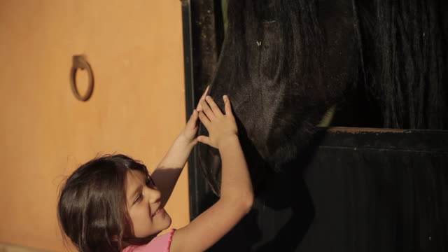 Girl petting a frisian horse. In stable. Cheerful. video