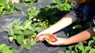 girl pick strawberry video