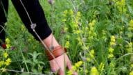 Girl picking wild flowers in field video