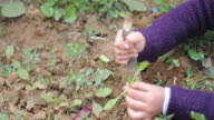 Girl planting vegetable plant in a nursary video