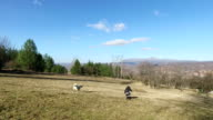 Girl playing with dog video