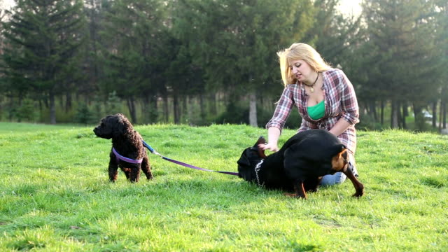Girl playing with dogs in the park video