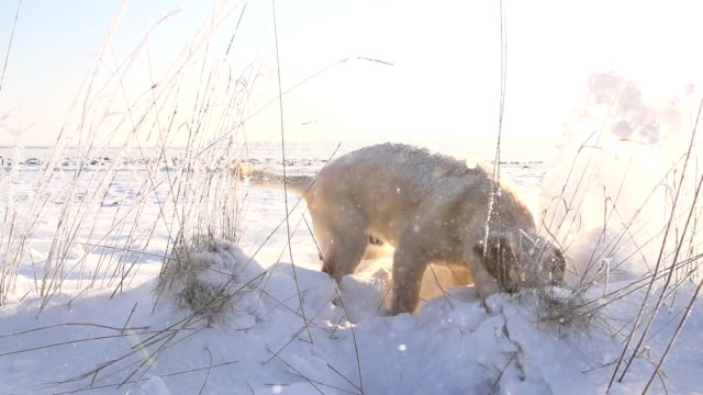 SLO MO Girl Playing With Puppy In Snow video