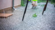 Girl Running in Huge Puddles In Yard At Torrential Rain video