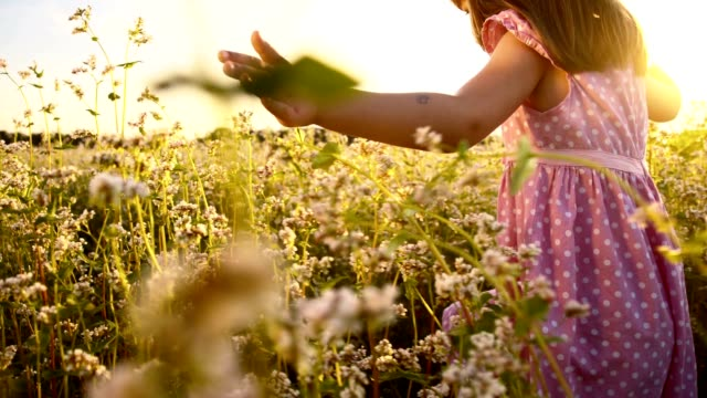 SLO MO Girl running in the buckwheat field at sunset video