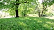 Girl running in the green park. video