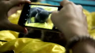 Girl Shooting Cat With Mobile Phone On Yellow Background video