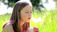 Girl Sitting In Summer Field Blowing Dandelion Flower video