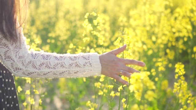 A girl stroking flowers on a rapeseed field video