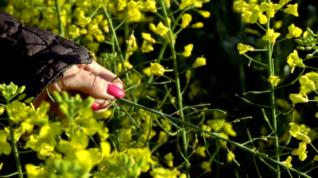 A girl takes a rape-flower hand. Slow motion video