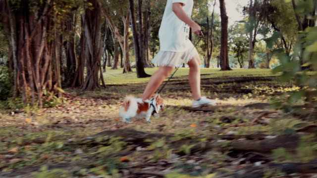 Girl walking with Chihuahua dog video