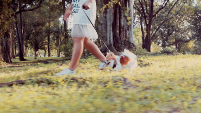 Girl walking with her Chihuahua dog video