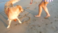 Girl writing the word summer on the beach sand and her golden retriever is playing around video