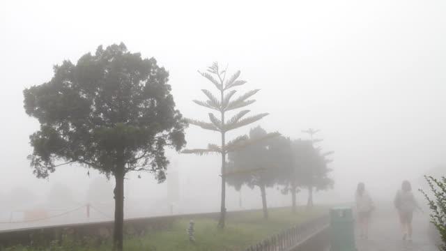 Girls walking in the mist. video