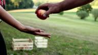 HD MACRO: Giving apple video