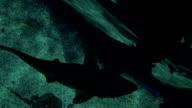 Glass floor and swimming small shark in ocenanarium video