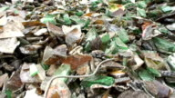Glass recovery - mixed cullet heap video
