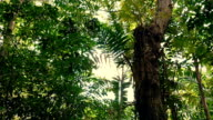 Gliding Under Jungle Trees With Flickering Sun video