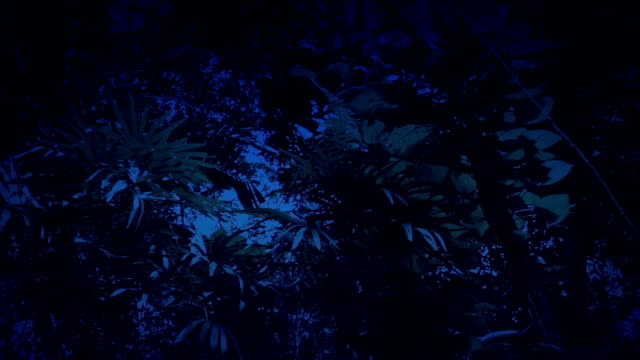 Gliding Under Rainforest Plants And Trees At Night video
