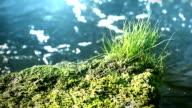Glittering water in the sun. video