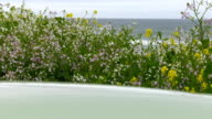 Glossy surface with wildflowers and ocean on background. video