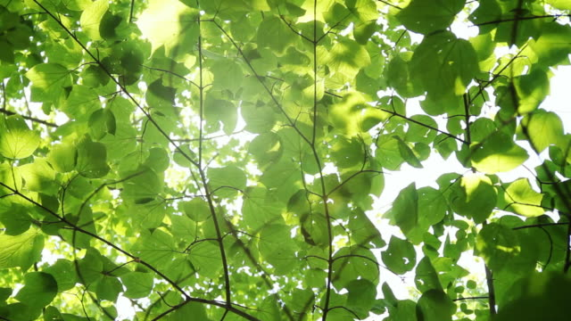 Glowing sunshine through canopy video