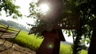 Glowing sunshine through Leaves - Stock Footage video
