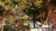 go green. Green ecological building.View of a closed window and of a wall covered with ivy video