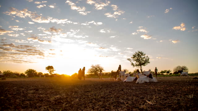 WS DS Goats In The Himba Village video
