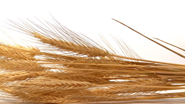 HD DOLLY: Gold Wheat Stems video