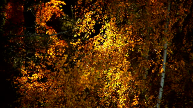 Golden Autumn video