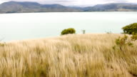 Golden field with Beautiful lake video